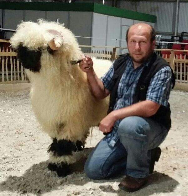Herdbuchzucht Der Walliser Schwarznasenschafe Und Weiterer Tierarten